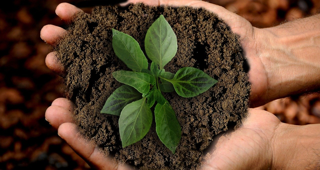 Nachhaltig leben – wie geht das konkret?